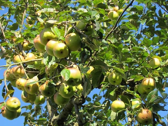 apple-1698597_640